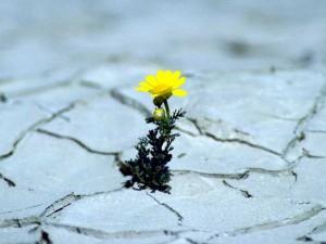 pflanze_in_guter_hoffnung